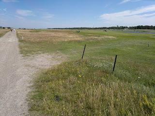 Golfa bredvid stranden i Skanör, fina golfbanor