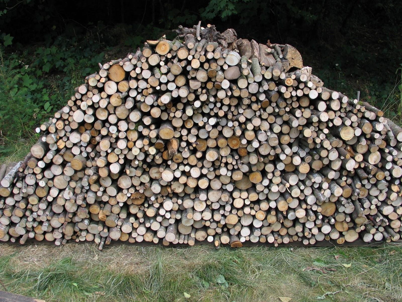 Focus On Fiber Wood Pile