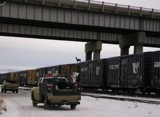 veado apanha comboio