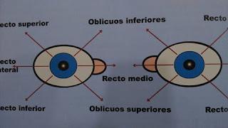 esquema de ojos
