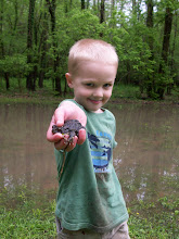 Jack Frog Catching