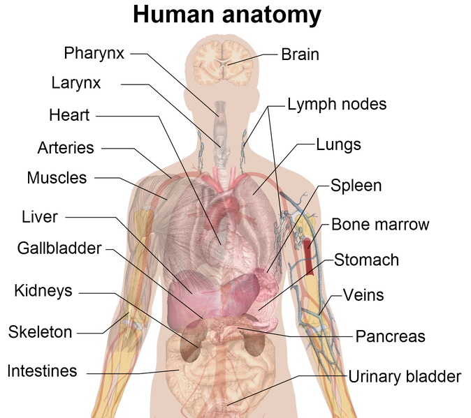 Anatomy and Physiology Study Guide and Course for Students, Nurses ...