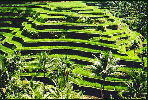 Banaue rice terraces tour philippines for The terraces 2