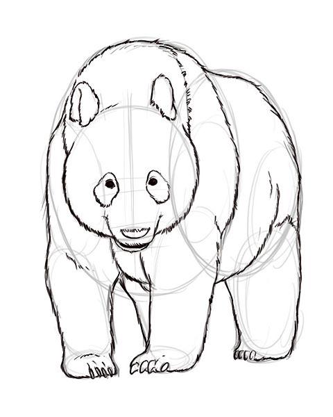 panda outline step 5