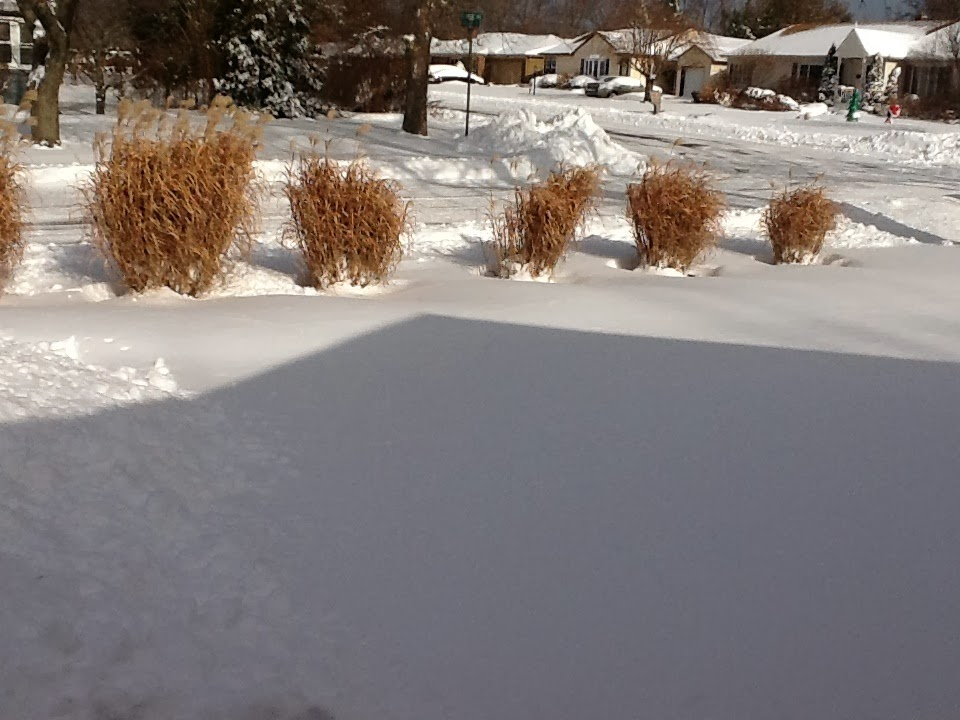 and yard in (West?) Long Branch, N.J., morning of January 3, 2014