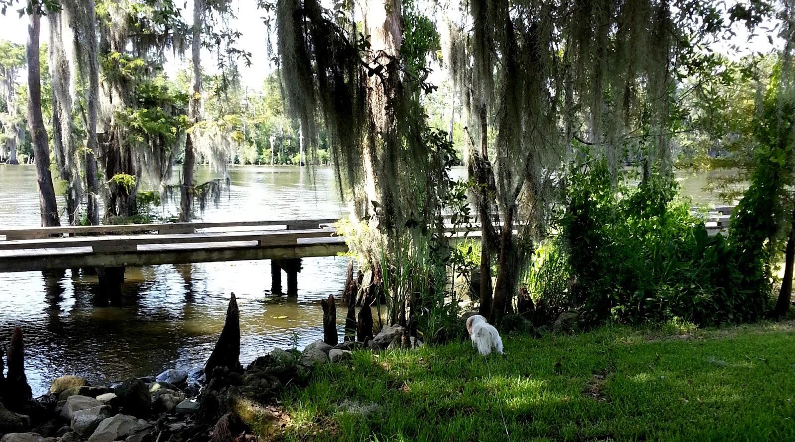 Movies Madisonville Louisiana - 0425