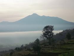 view cipelangfarm