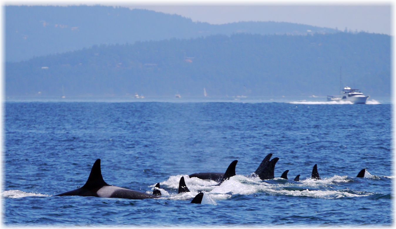 single men in orcas Jane fonda, her life and men star in a revealing documentary  orcas (killer whales):  she's dating a man in an open marriage will her business partner disapprove.