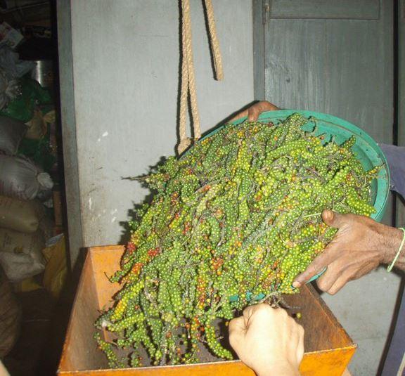 sri lanka spice garden