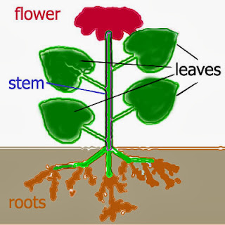 PLANT LIFE CYCLES