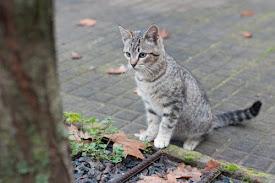 el gato confite en internet