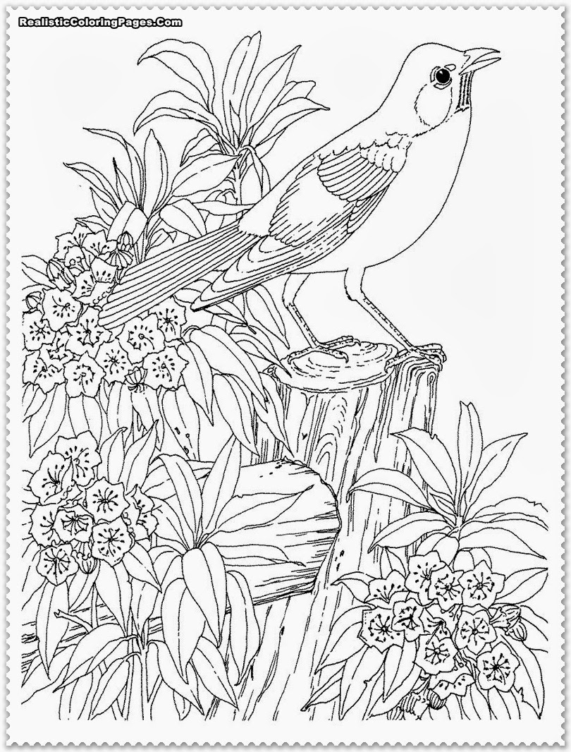 realalistic coloring pages - photo#3