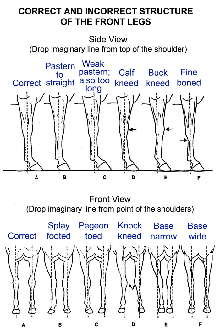 how to draw a horse standing on its hind legs