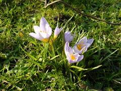 A jednak wiosna....