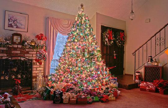 الاصول الحقيقية لشجرة عيد الميلاد