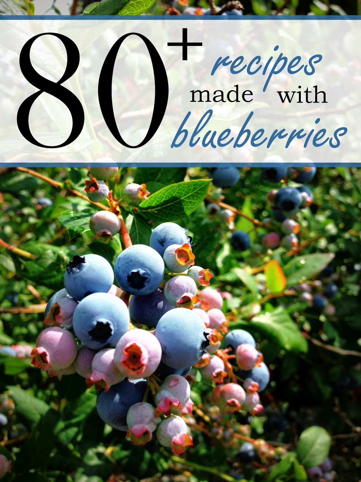 Round Up of over 80 Blueberry Recipes!  #recipe #blueberry