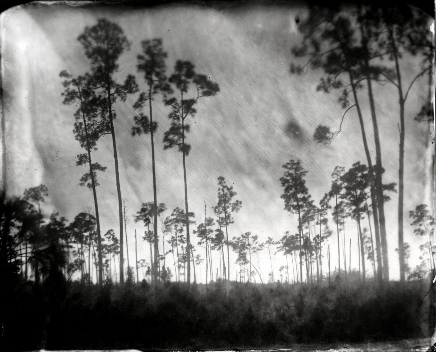 The large format black and white photographs of the florida everglades are here her kickstarter page has a short video discussing the her inspiration and