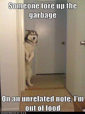 "Dog standing in doorway says, ""someone tore up the garage. On an unrelated note, I'm out of food."