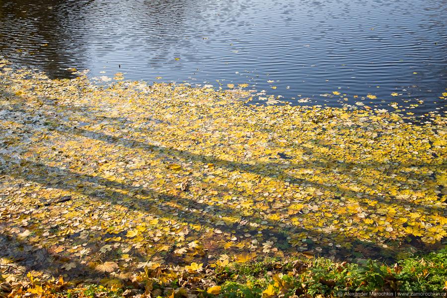 Желтые осенние листья на воде