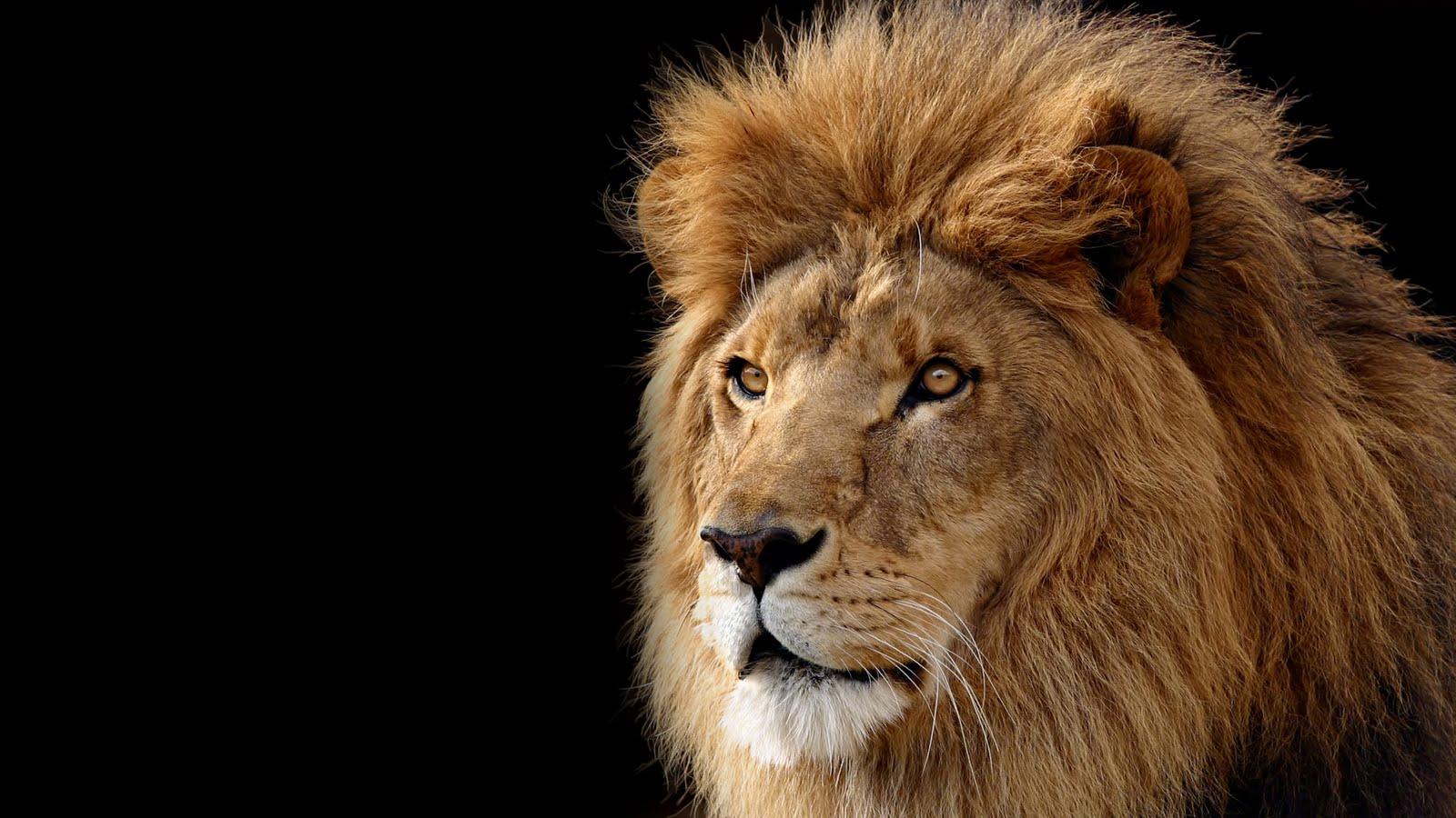 http://4.bp.blogspot.com/-6eL41VKhEok/TjV1XtTAUxI/AAAAAAAAAOk/iEnmlEZMizM/s1600/mac_os_x_lion_wallpaper_by_theandrenator-d35tk7t.jpg