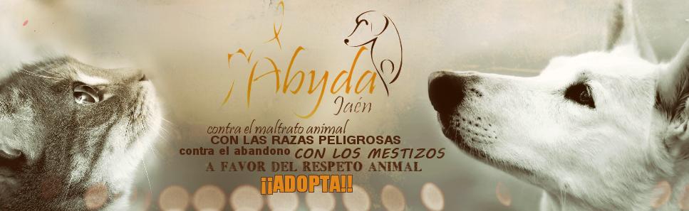 Abyda Jaén Blog