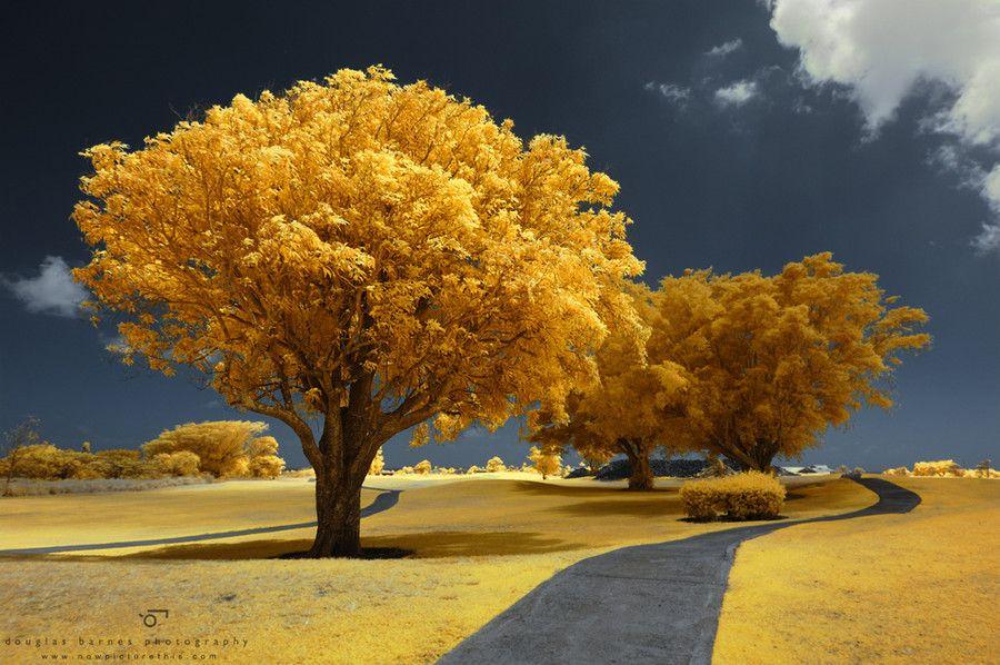 1. Trees by Douglas Barnes