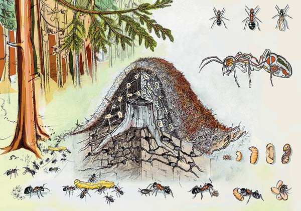 """Проект """"Дом с улыбкой"""": """"Вот домик муравья. К нему подсела я"""": http://psichologyirisovaniehomewithsmile.blogspot.com/2012/08/blog-post_3.html"""