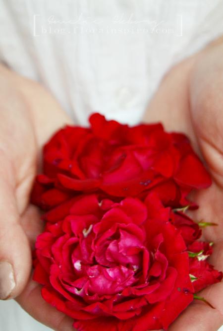 garden roses, red rose, red roses, rose nina weibull, #2Flowergirls