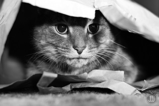Cat in a Bag by James Whitesmith from flickr (CC-ND)