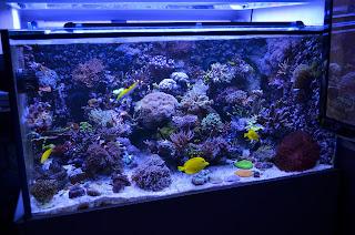 merawat+akuarium+mini Tips Merawat Ikan di Akuarium