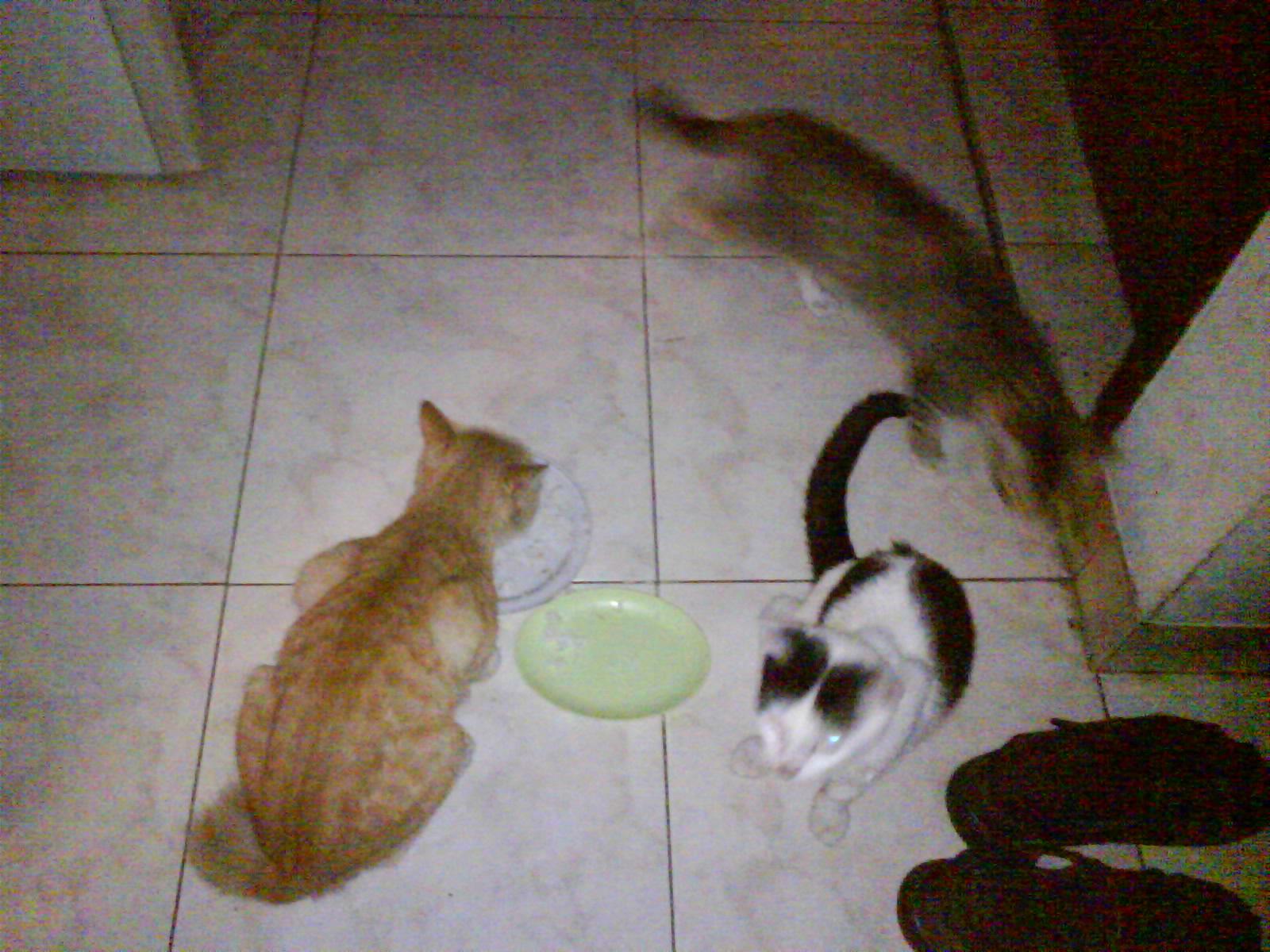 Kucing Betina Habis Kawin A Dayeuh In A Life Kelakuan Si