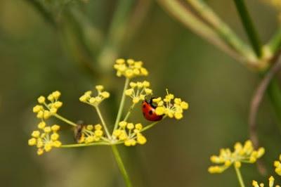 Βοηθώντας τα ωφέλημα έντομα