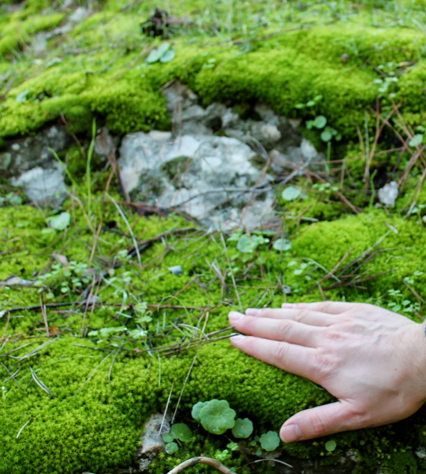 moss grown on stone stagnation