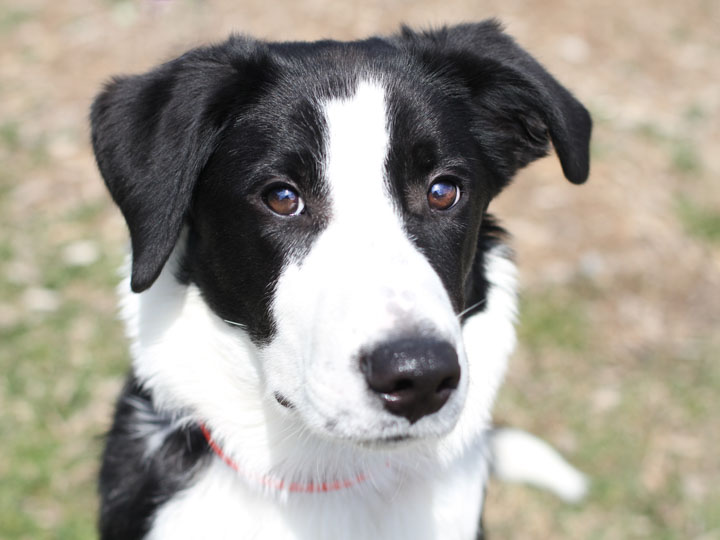 For adoption information on this dog and other dogs and cats and