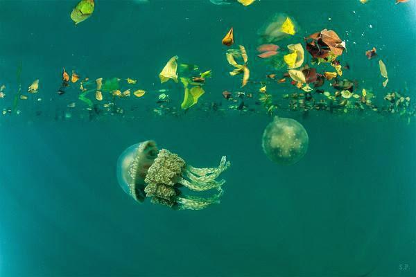 Travel notes mondo medusa for Gros morne cabine del parco nazionale
