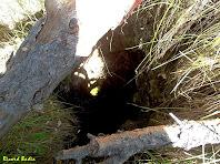 Uns troncs protegeixen de caure a l'Avenc de la Roca Tiraval. Autor: Ricard Badia