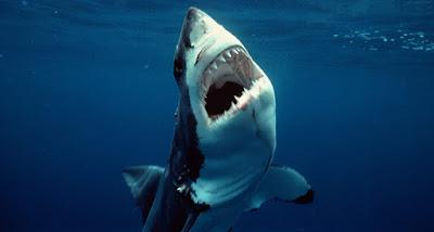 El impresionante Gran tiburón blanco