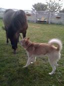 Arrowek i konie