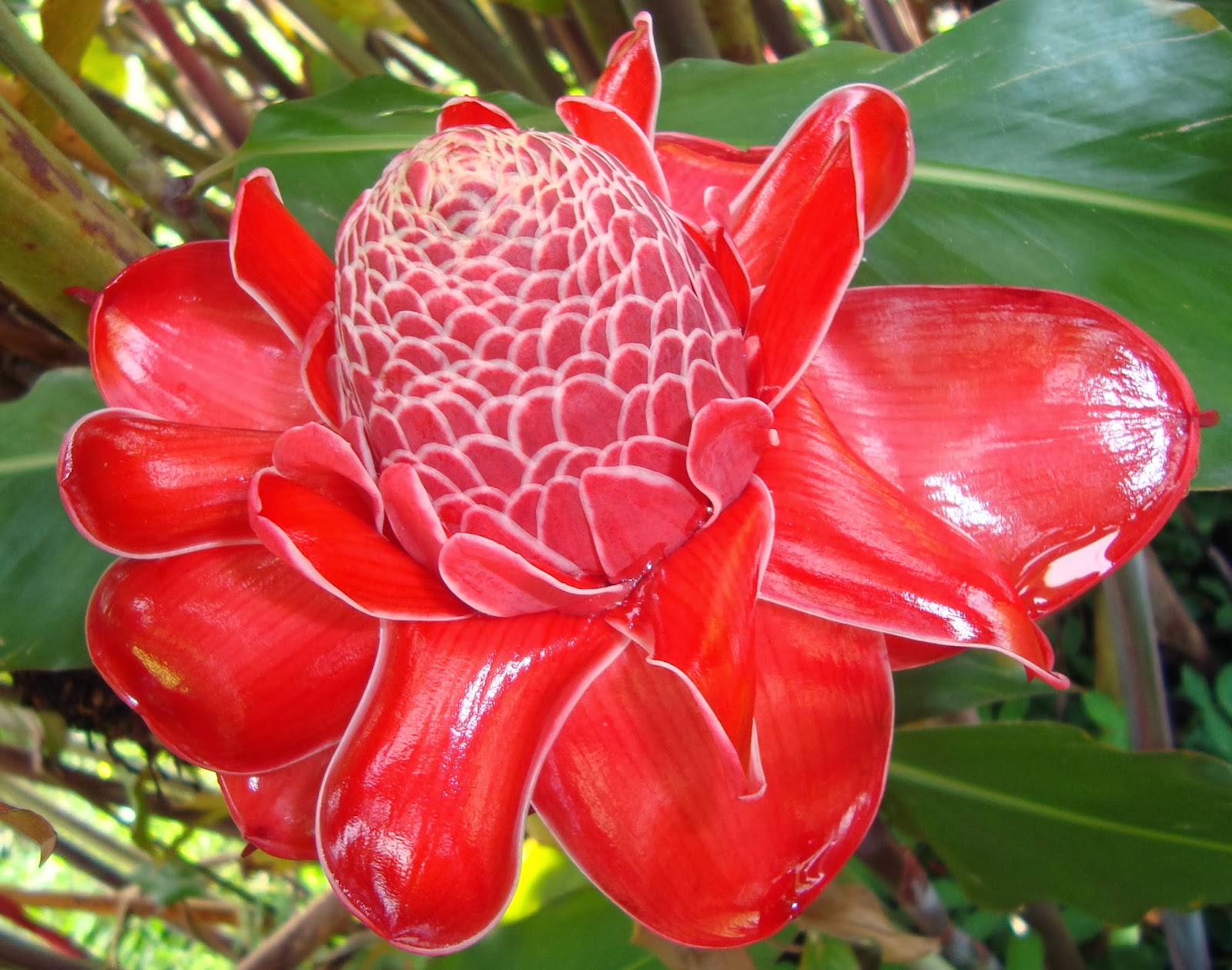 Top 10 Exotic Flowers For Gardening Part 1