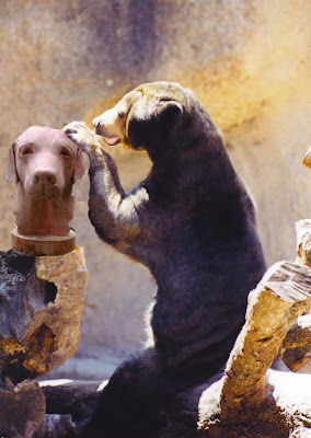Animals Acting Like People Seen On www.coolpicturegallery.us