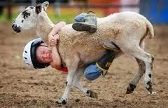 seorang anak kecil sedang mau terjatuh saat menunggangi seekor kambing