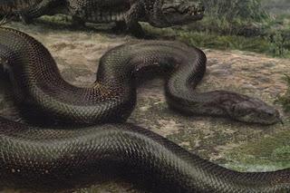 Ученые нашли останки гигантской доисторической змеи