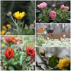 December in the garden  🙂