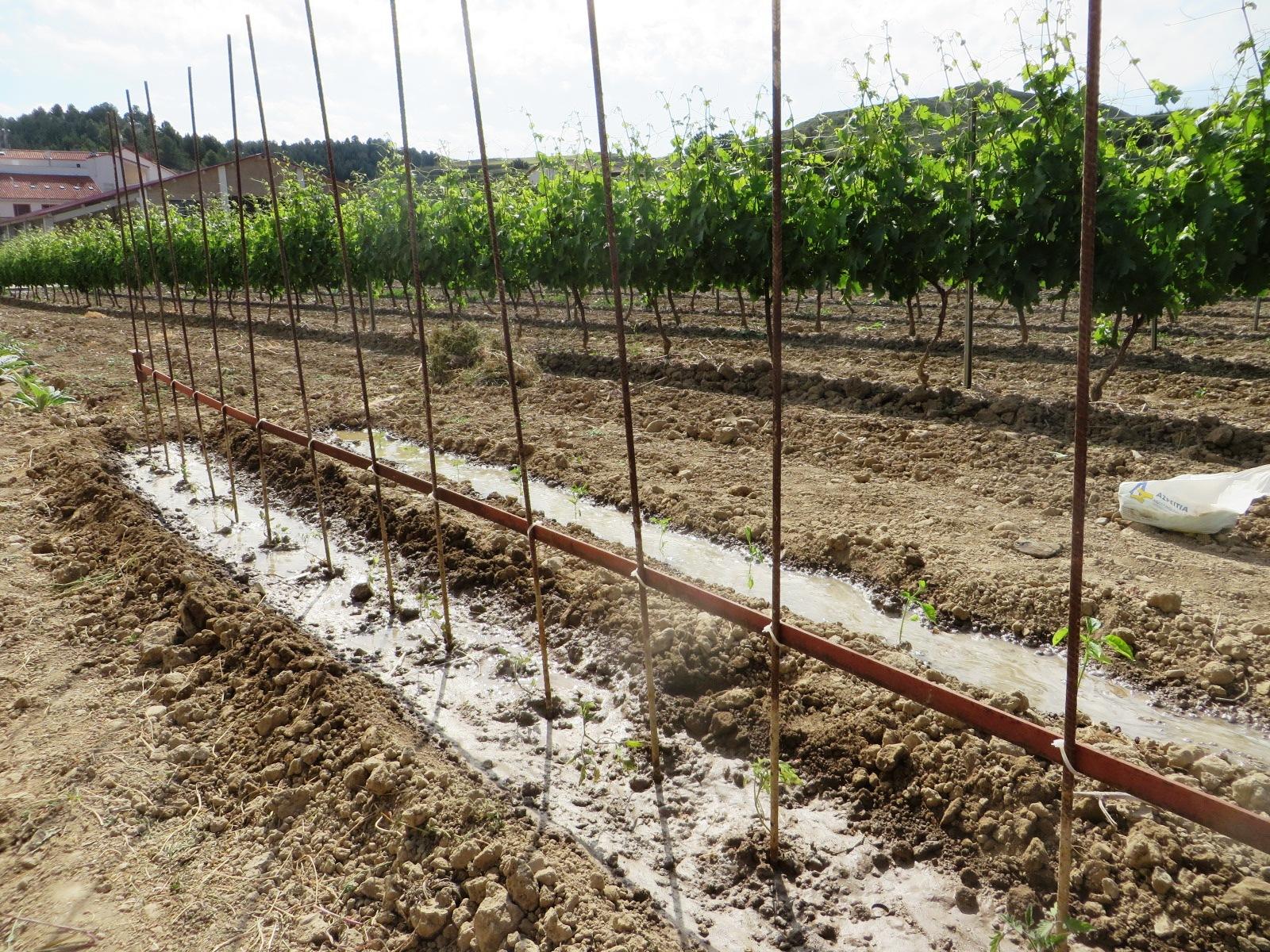 Urbina vinos blog huerto de secano tomates pimientos - Como cultivar un huerto ...