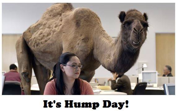Geico Happy Hump Day Images Yep, it's hump day.