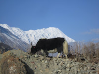 Trekking in round annapurna