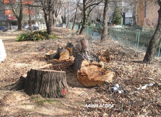 Ρημάξανε τα δέντρα στη λαϊκή αγορά
