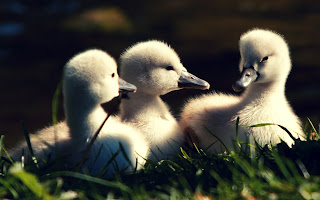 Cute bird HD picture free download