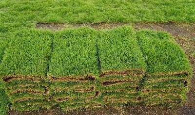 การปลูกหญ้าขาย