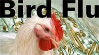 Bird Flu Sends Chicken Prices Crashing in TN